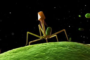 Bacteriophage, computer artwork.