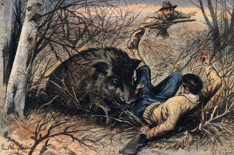 was a 1 800 lb wild boar really shot in conroe texas