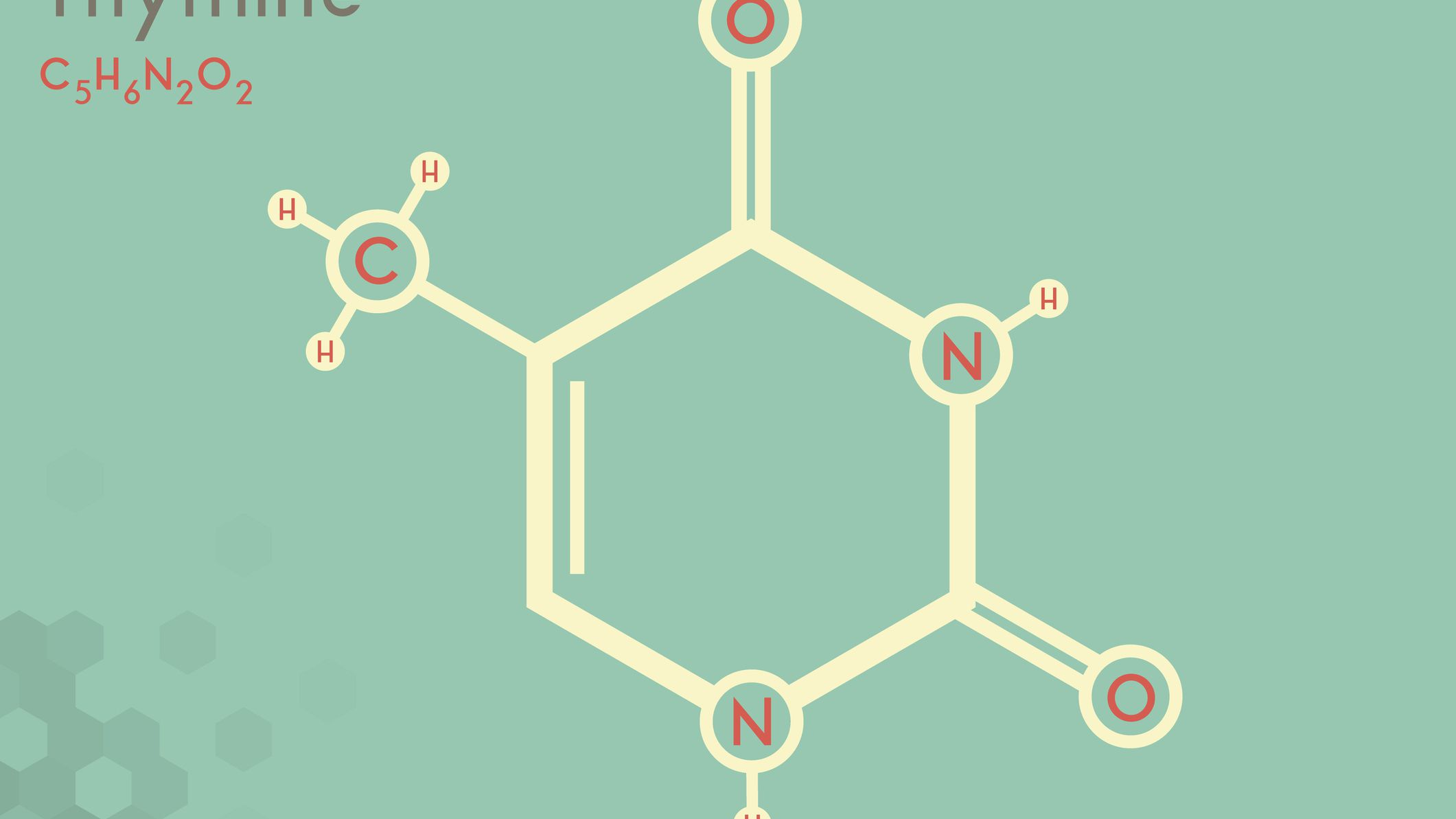 Thymine Definition, Facts, and Functions