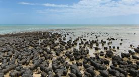 Stromatolites first appeared during the early Archean Eon.