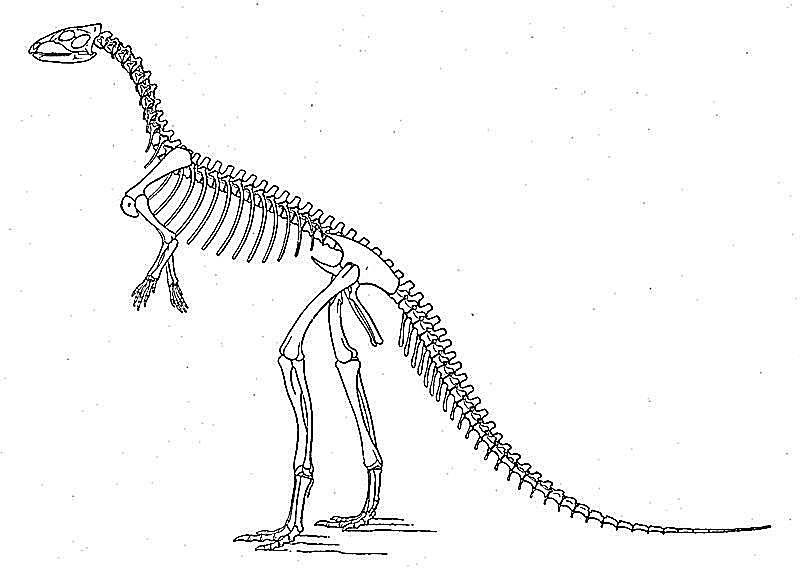 laosaurus