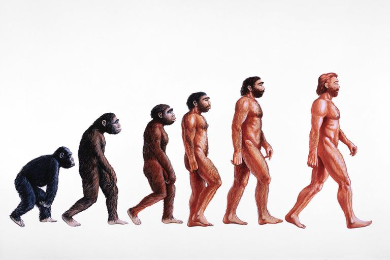 Illustration of evolution of man