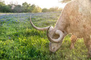 Texas Printables