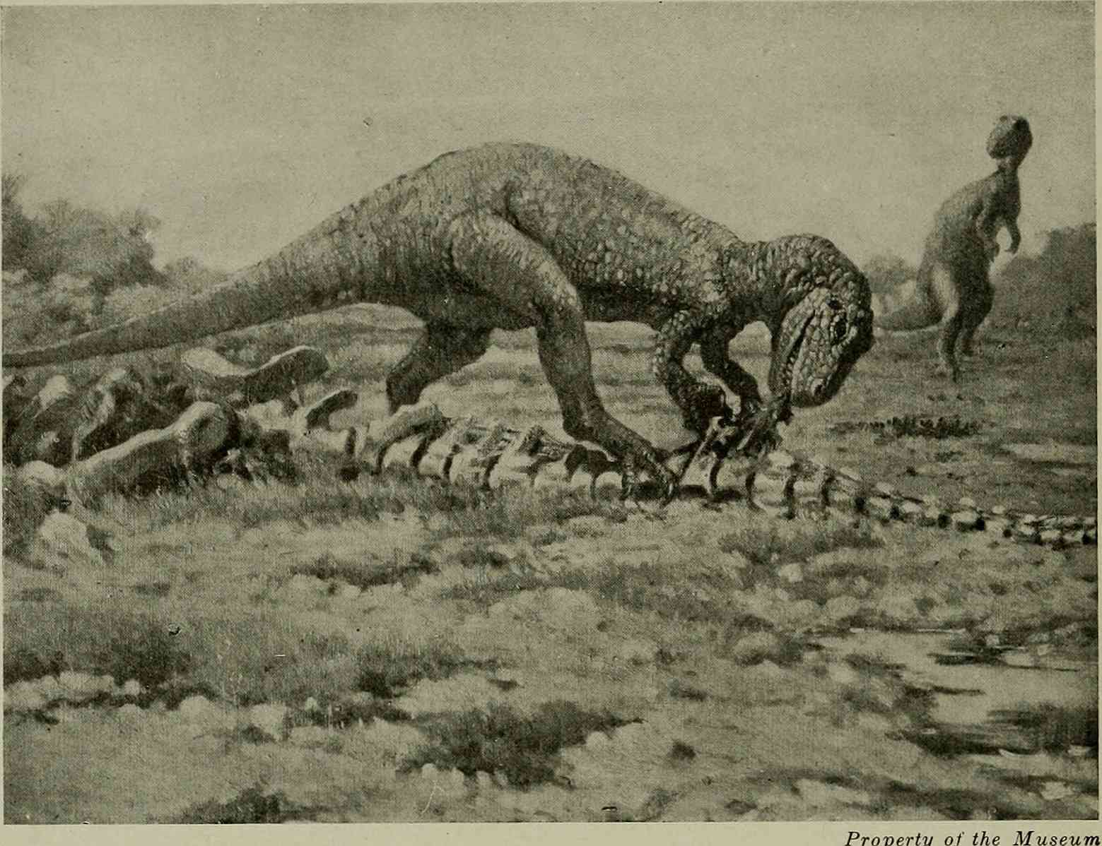 Early depiction of Allosaurus