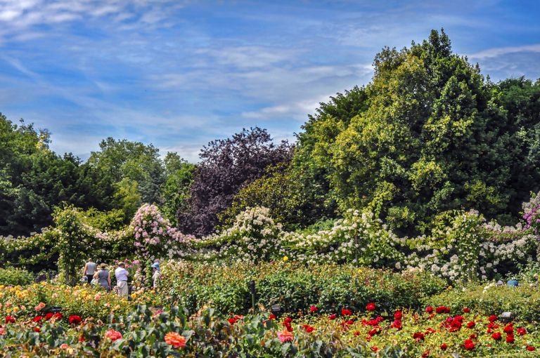 Queen Mary's Garden in Regent's Park