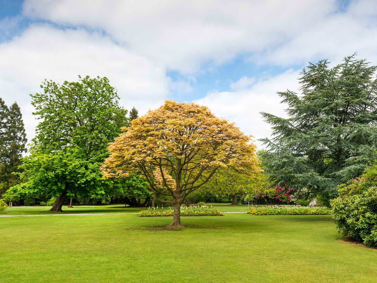Top Reasons Why Trees Are Important