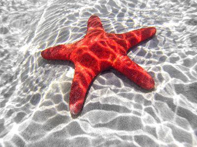 Sea Star Anatomy 101