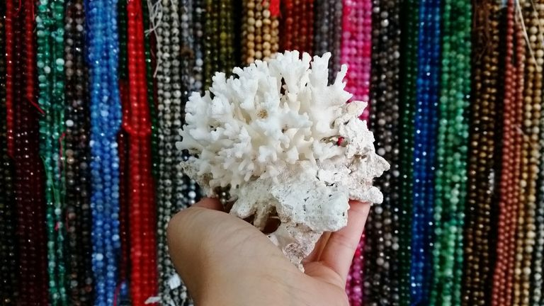 Close-Up Of Hand Holding Coral