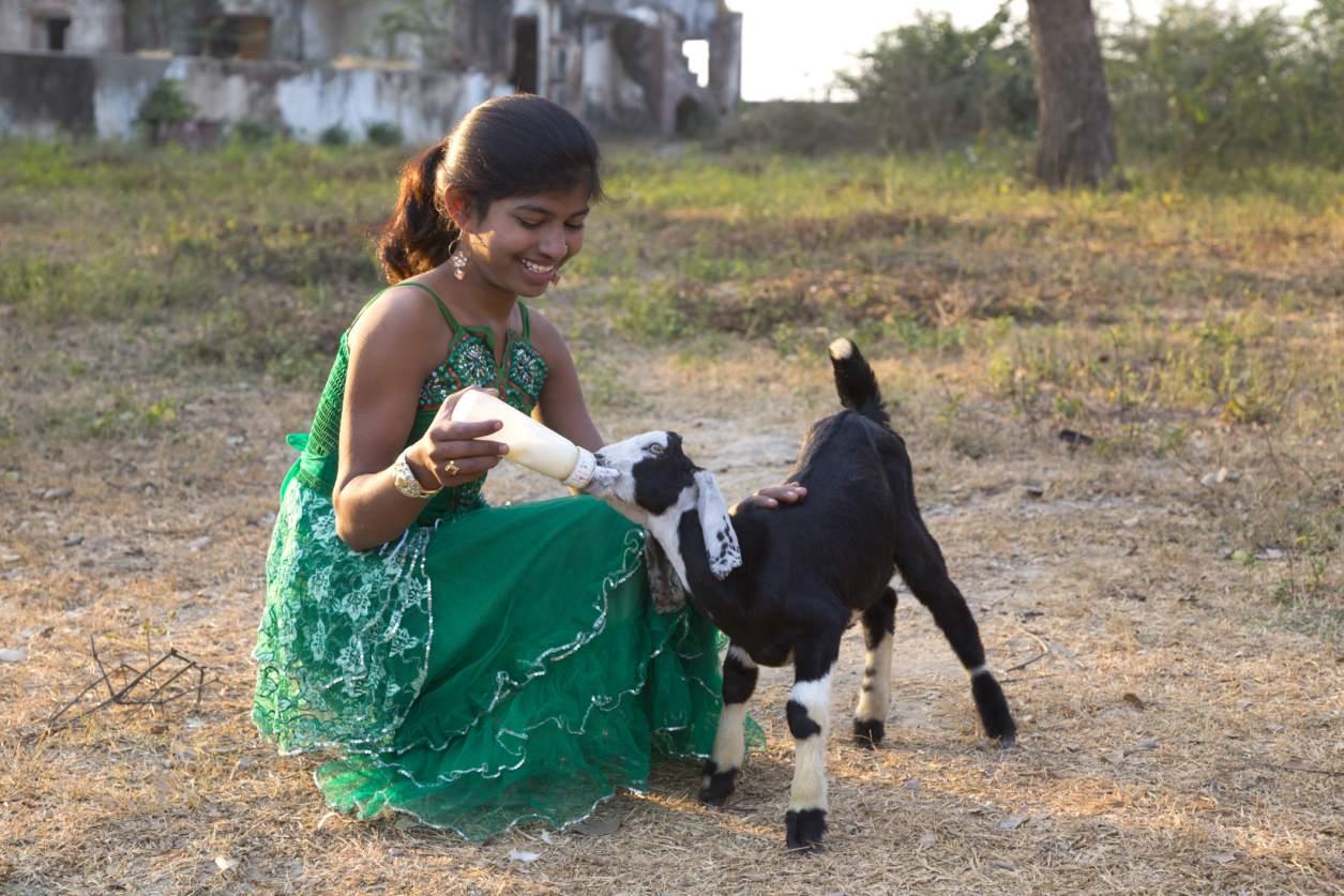 Girl bottle-feeds goat kid