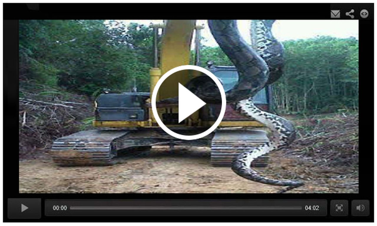scam 800pound snake pulled out of lake video