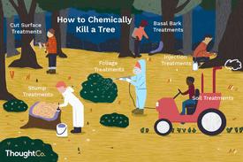 How to chemically kill a tree