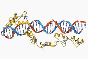 Transcription factors are protein that bind to DNA to aid transcription.