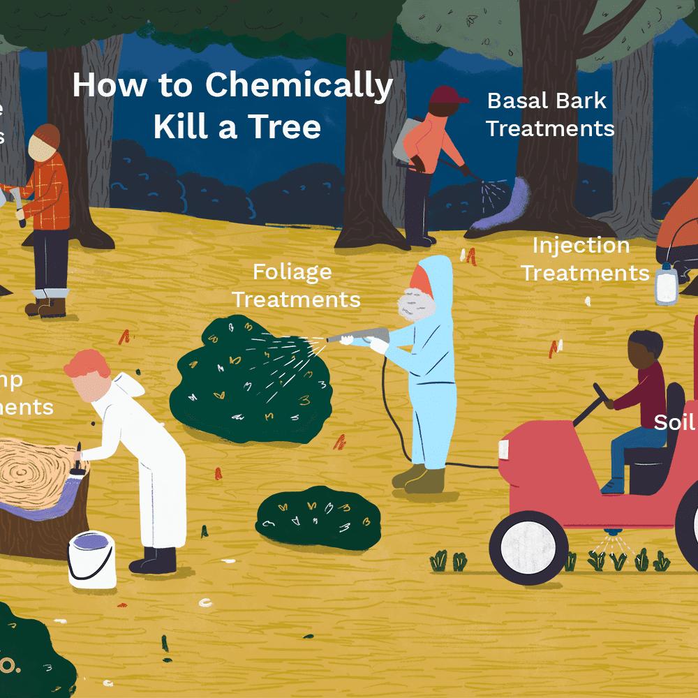 6 Ways to Chemically Kill a Tree
