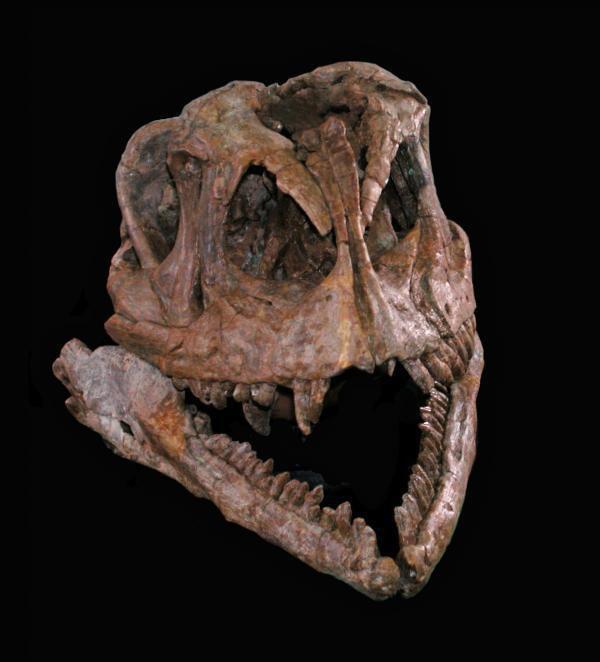 yizhousaurus