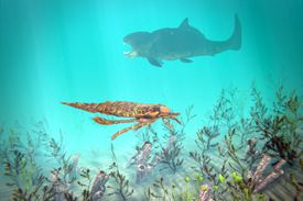 Eurypterus explores the sea floor with Dunkleosteus lurking in the background, a typical scene from the mid Ordovician to late Permian, 460 to 248 million years ago
