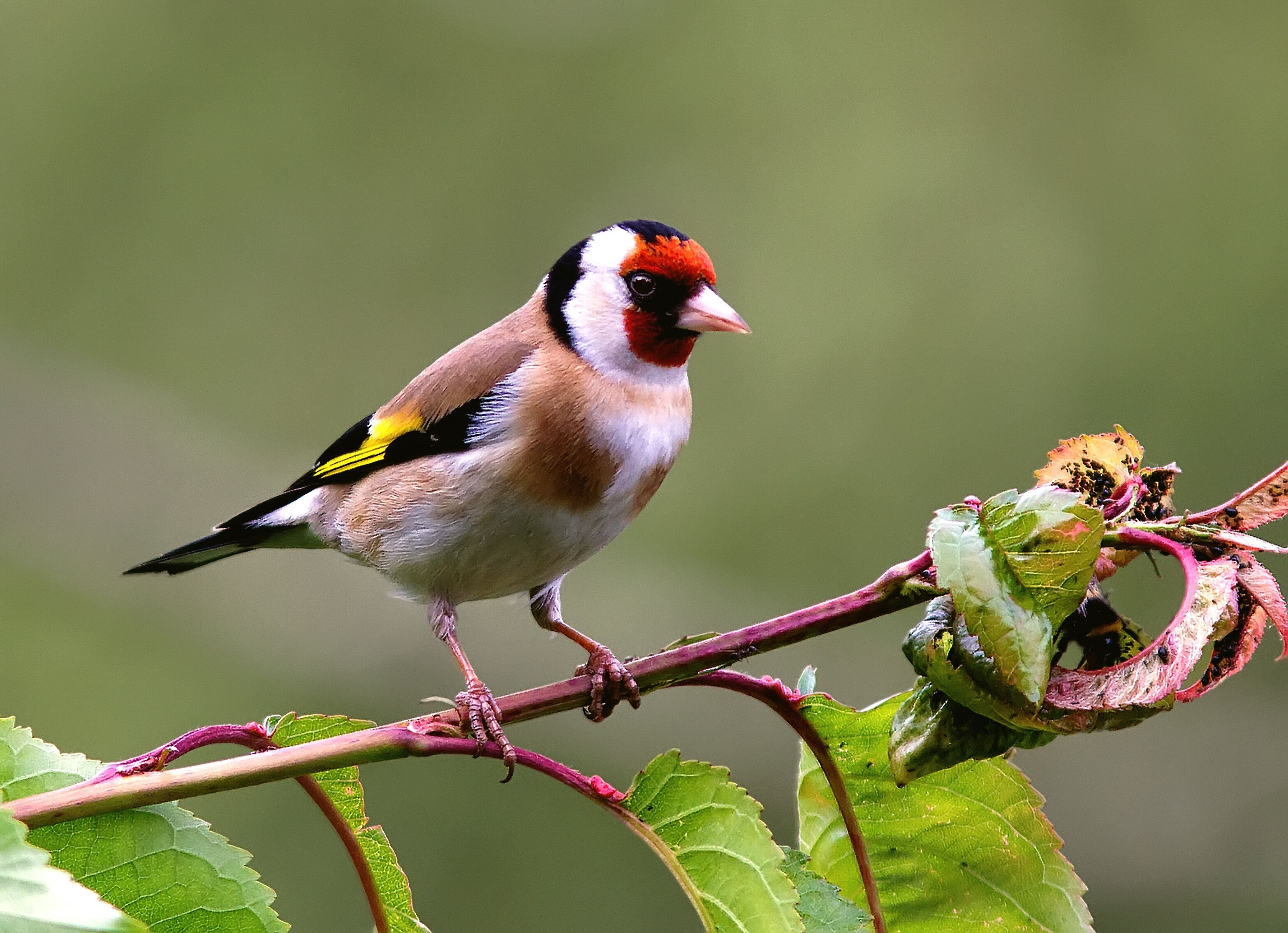 This is a picture of Persnickety Printable Bird Pictures