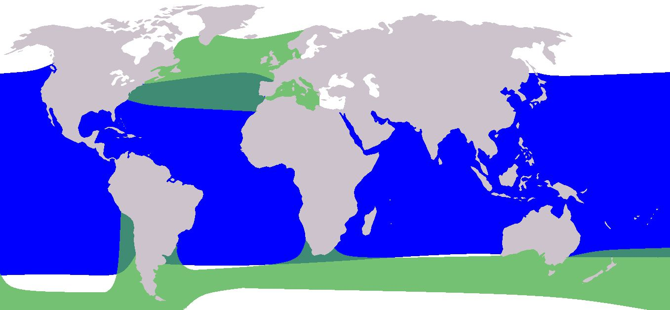 Pilot whale range: short-finned pilot whale in blue and long-finned pilot whale in green.