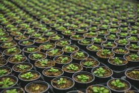 Plants in rows
