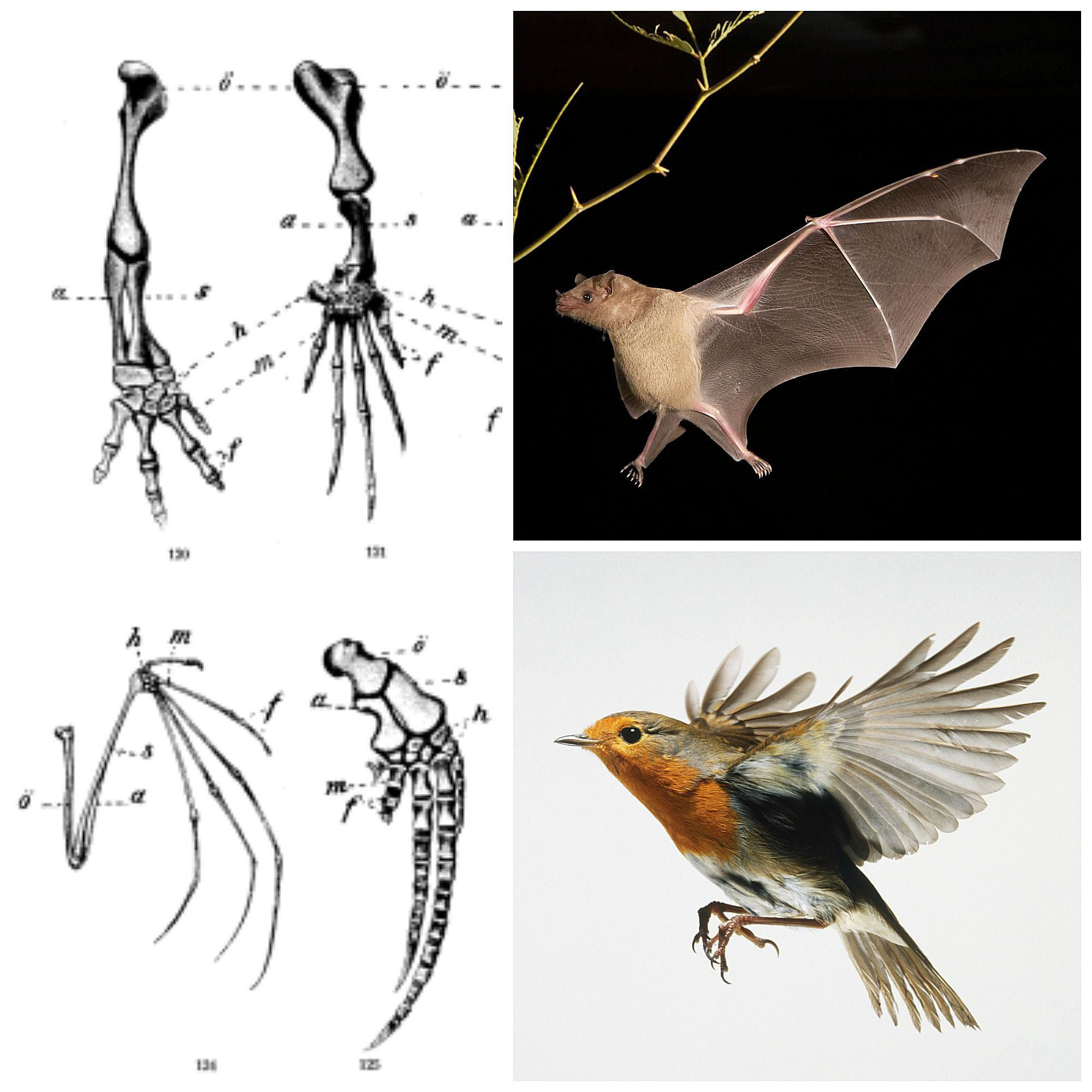 The Difference Between Homology and Homoplasy in Evolution