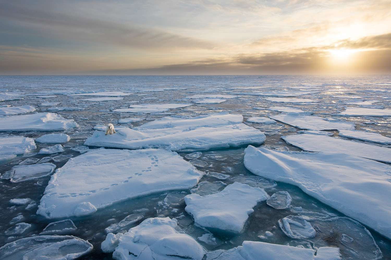 A polar bear is seen on sea ice in Spitsbergen, Svalbard, Norway in the Arctic Ocean.