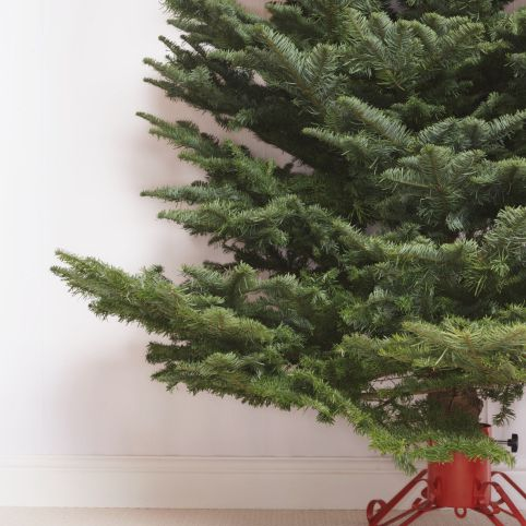 Keep your tree alive by using a tree preservative.