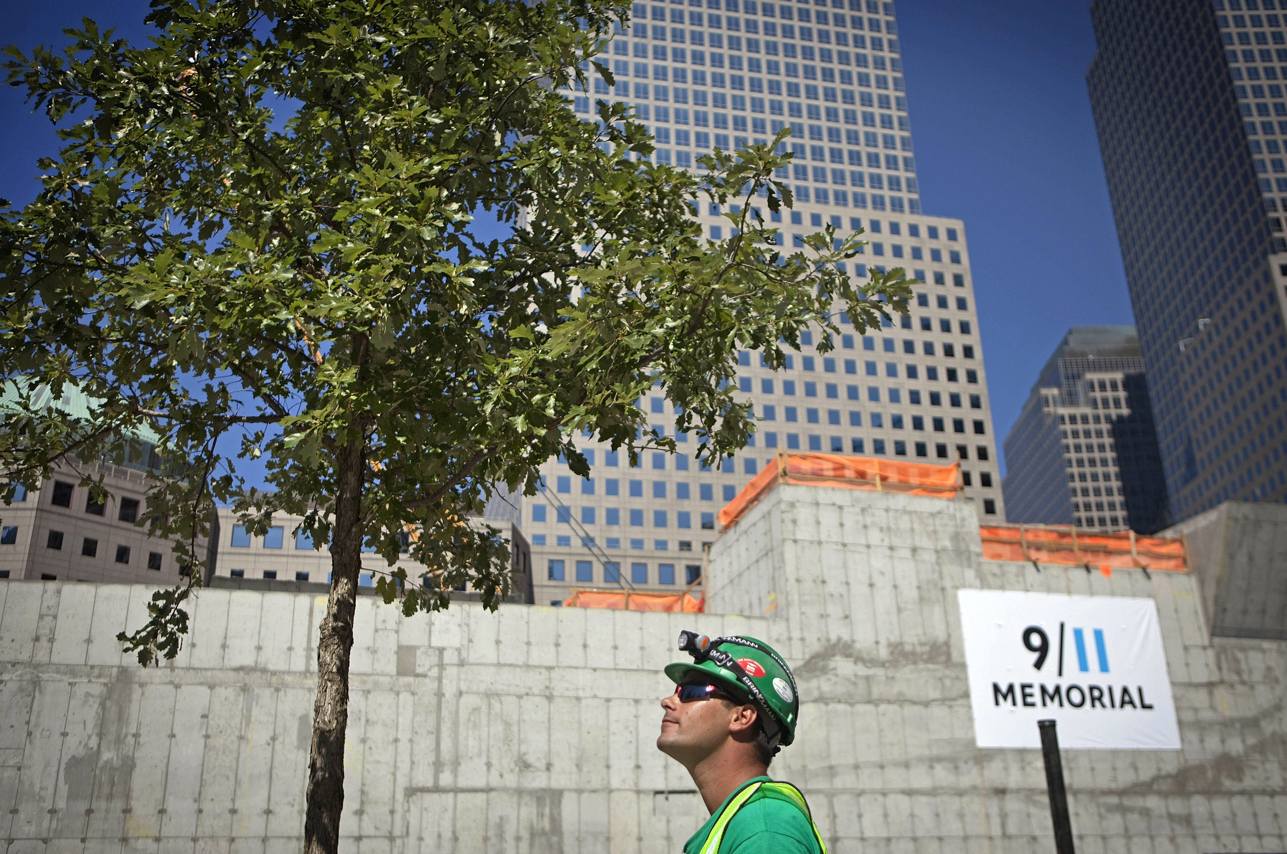 Worker Jay Martino looks up at one of the first Swamp White Oak trees planted around the World Trade Center Memorial Plaza. August 28, 2010