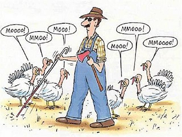 Image result for happy thanksgiving funny