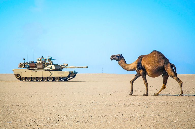 camel walking through desert with military tank in background
