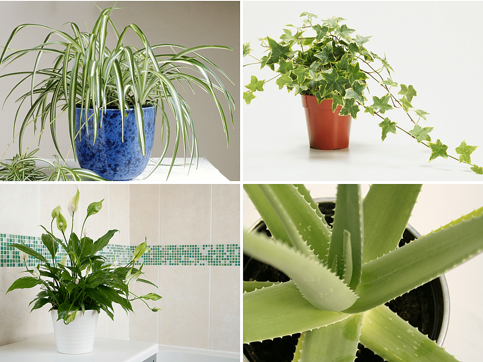 Air-Purifying House Plants for the Home