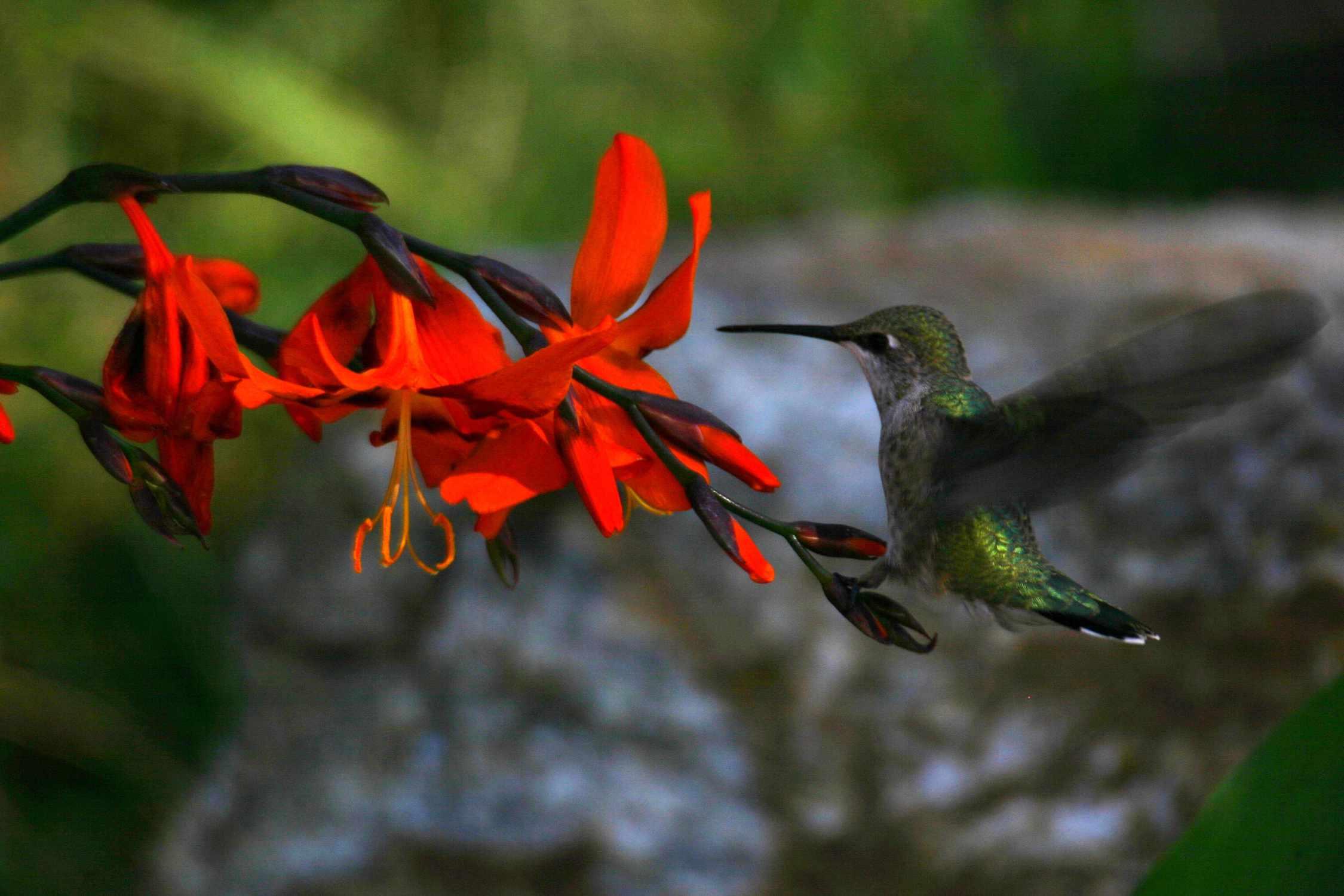 Die Beziehung zwischen Blütenpflanzen und ihren Bestäubern kann ein klassisches Beispiel für koevolutionäre Beziehungen sein.