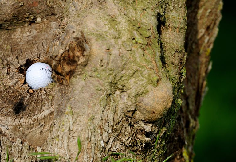 A golf ball is stuck on a tree during the second round of the Open Cala Millor Mallorca in Spain