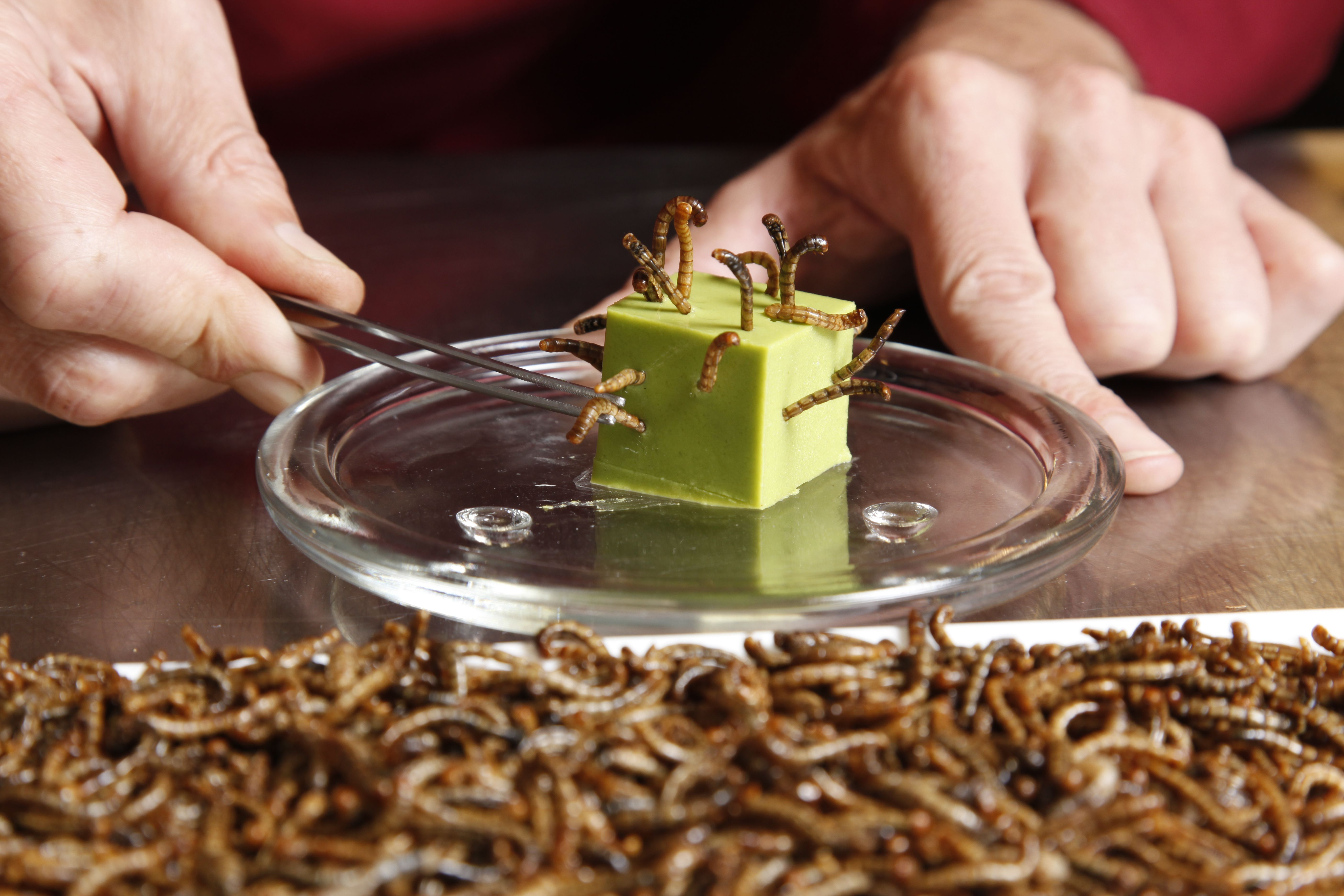 Mealworms are readily available as food for human consumption.