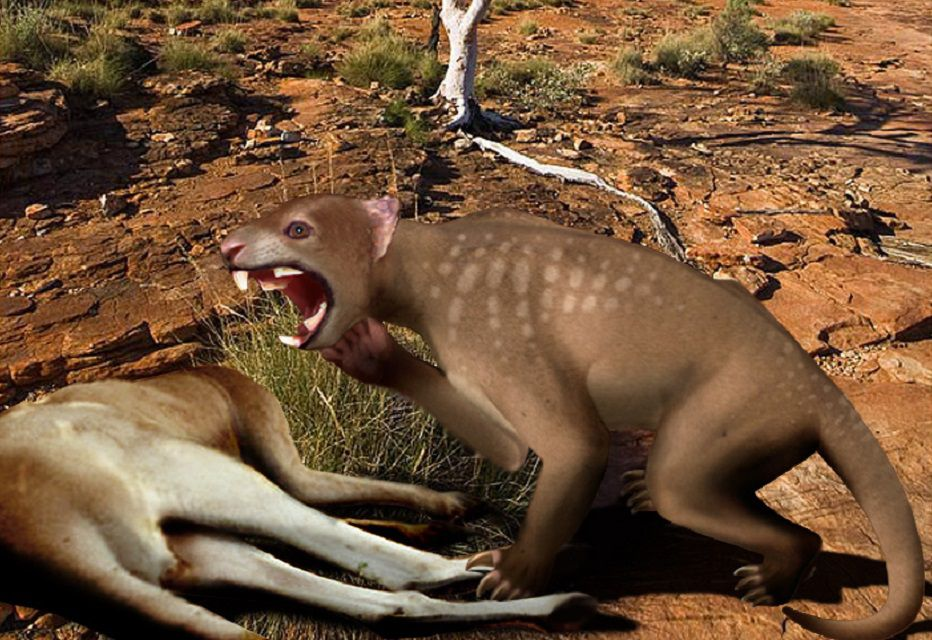 Artist rendering of thylacoleo attacking another animal.