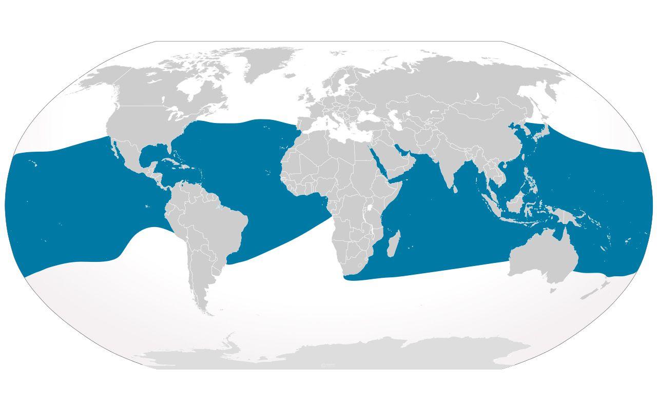 Manta ray distribution