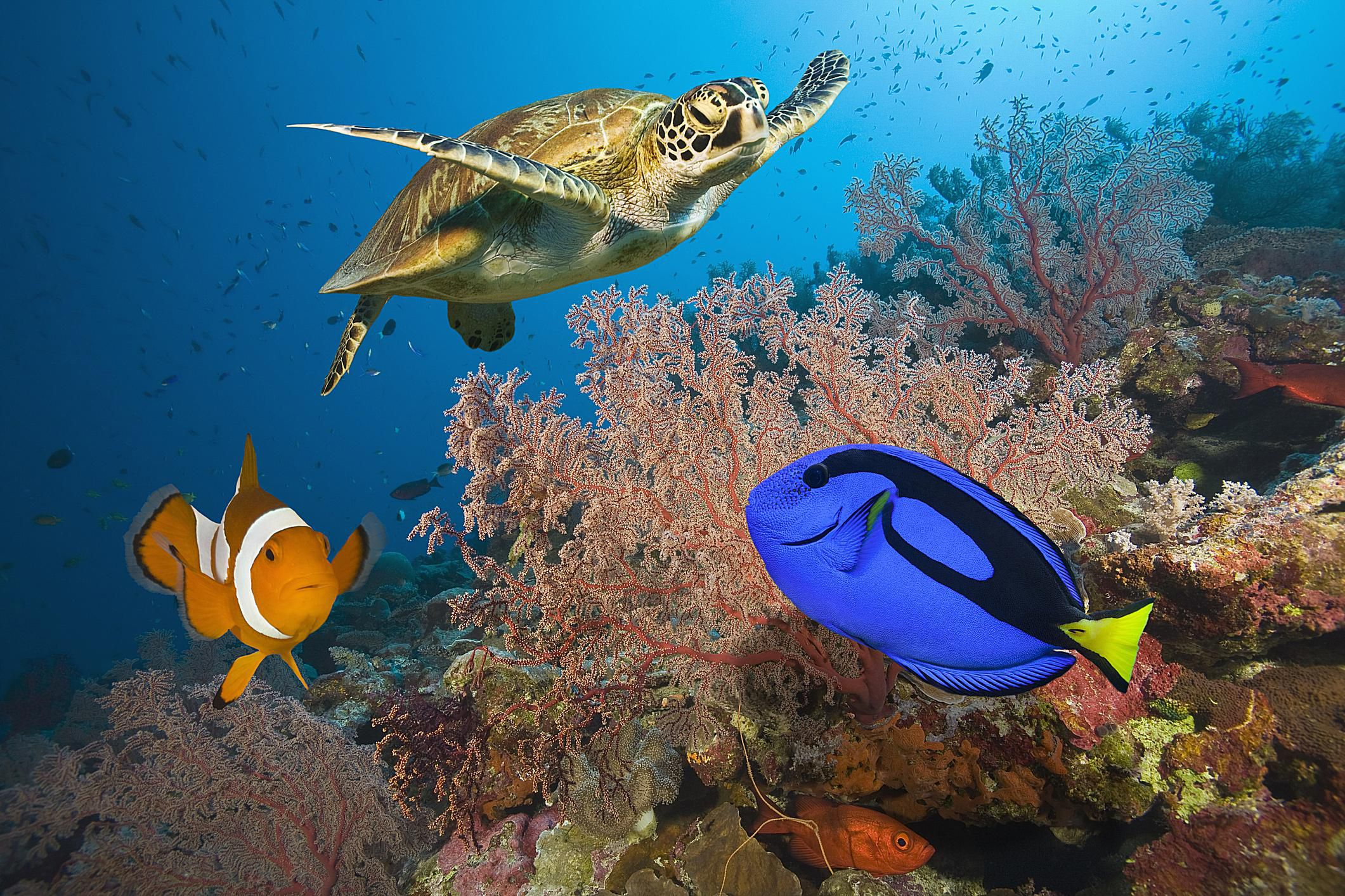 The Great Barrier Reef World S Largest Reef System