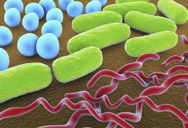 bacteria_shapes.jpg