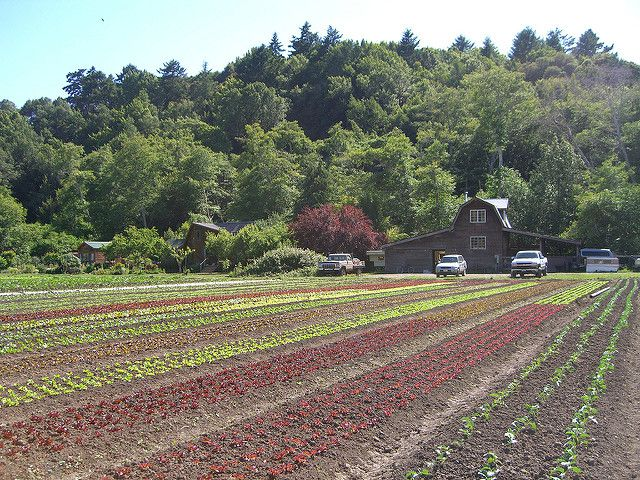agriculture-organic-impact-climate-change-sustainable-farm-photo.jpg