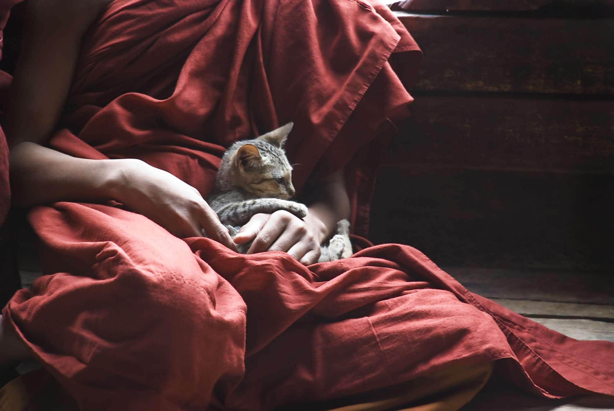 monk in Burma with kitten