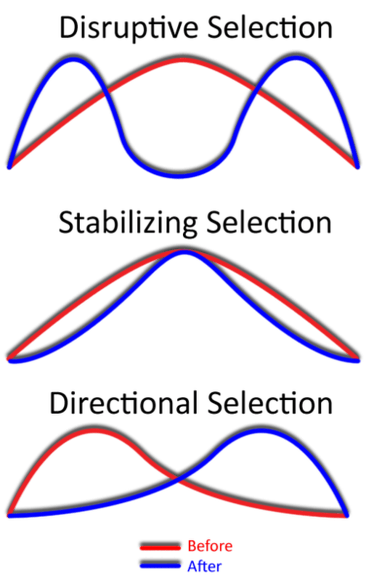 Different Types Of Natural Selection