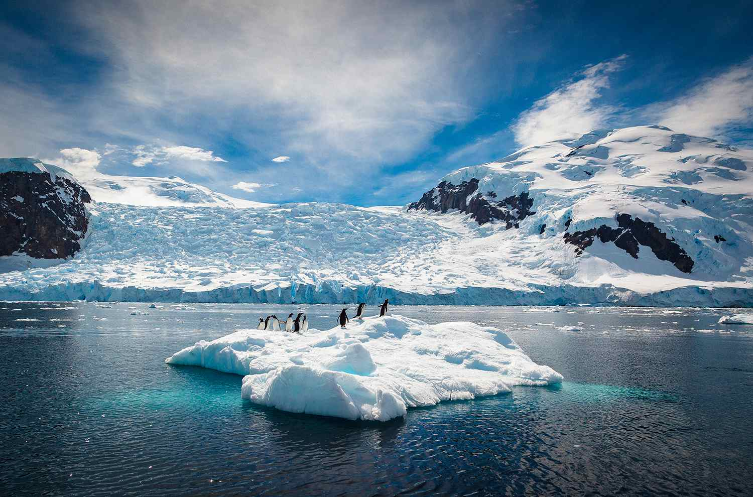 Penguins relax on a small iceberg, Antarctica.