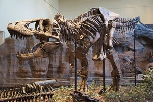 Tyrannosaurus rex holotype specimen at the Carnegie Museum of Natural History, Pittsburgh