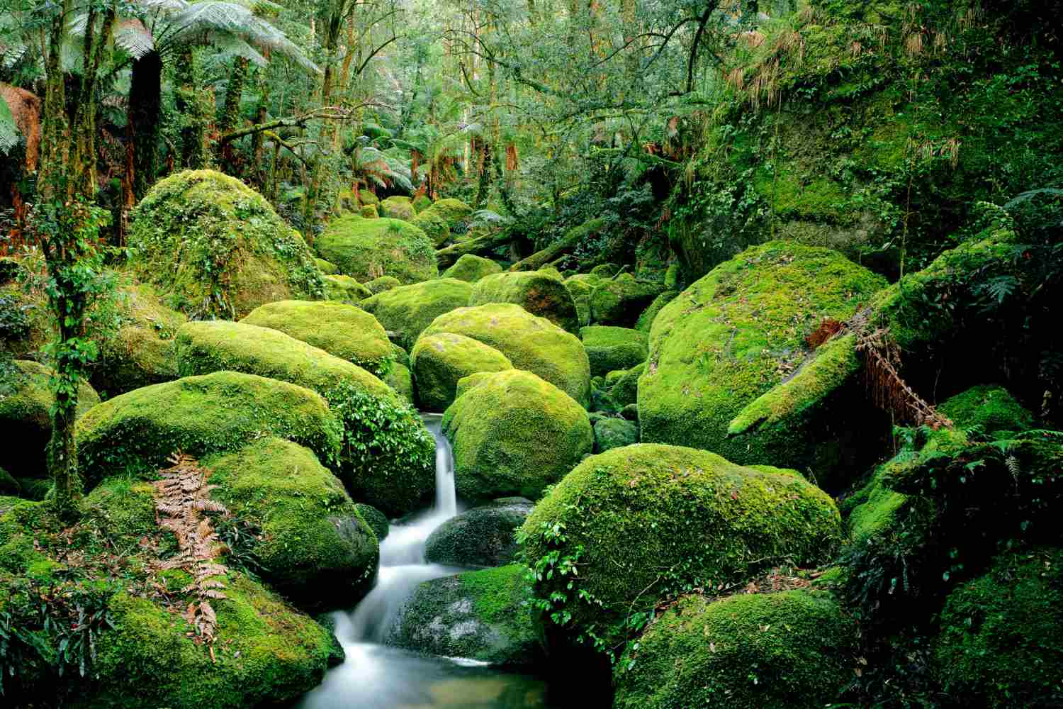 creek flowing through moss-covered boulders