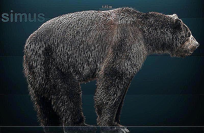 medve íj társkereső