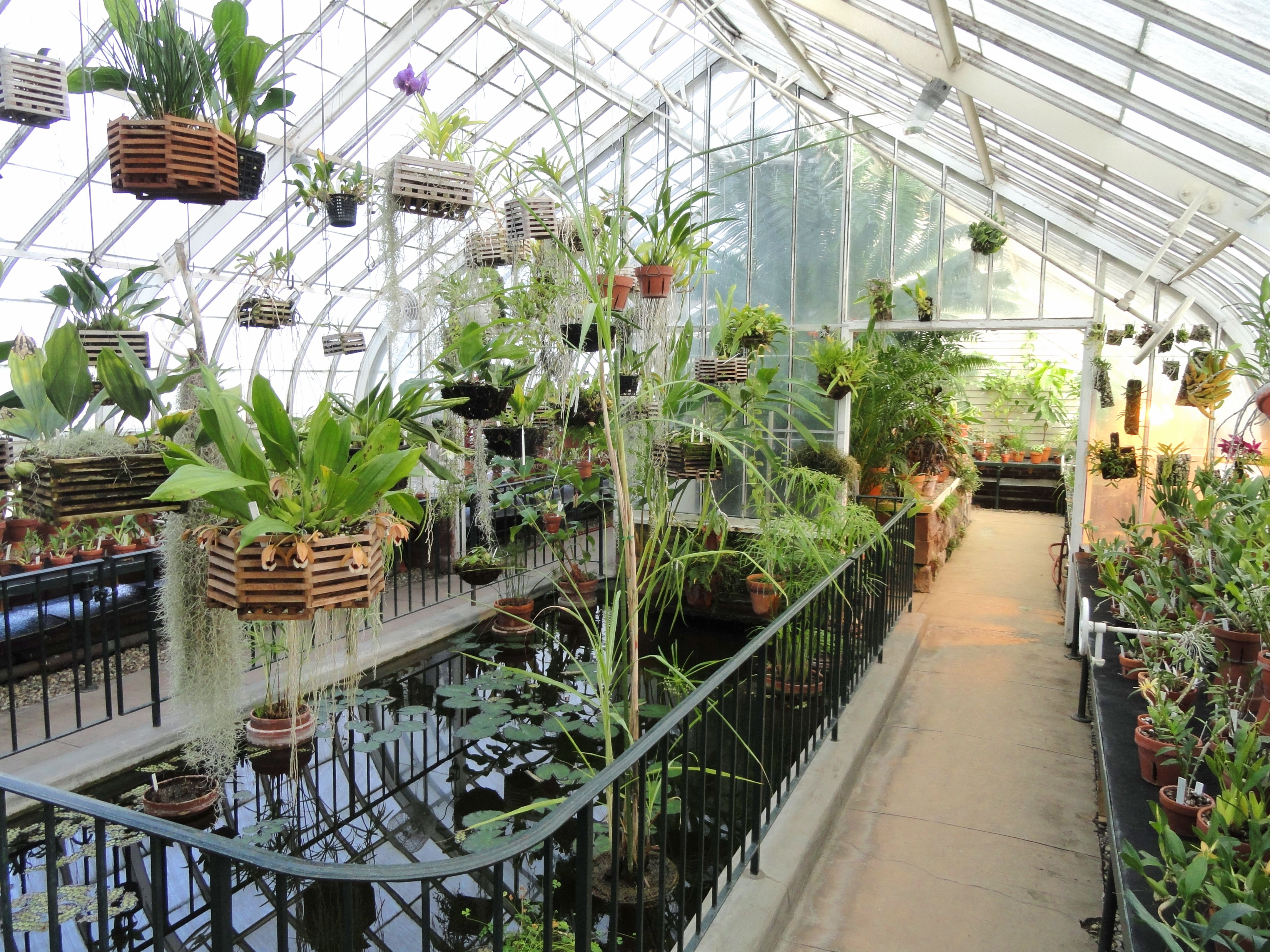 Interior view of Talcott Greenhouse at Mount Holyoke College