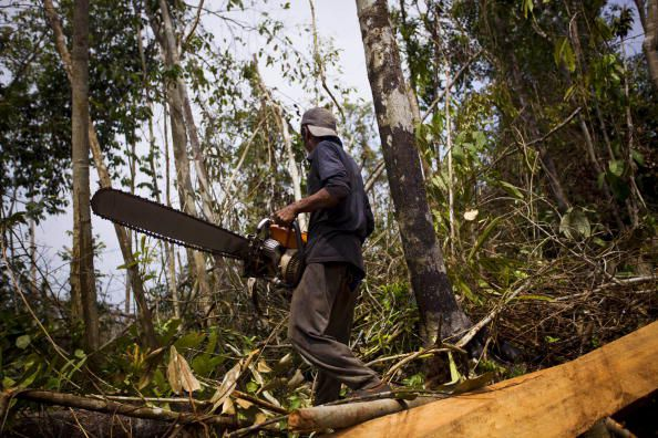 Deforestation In Asia