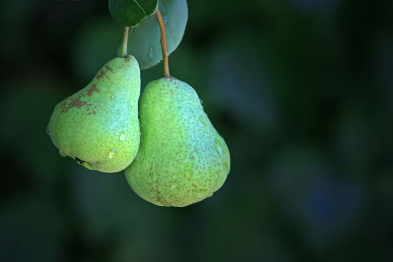A Pair of Pears