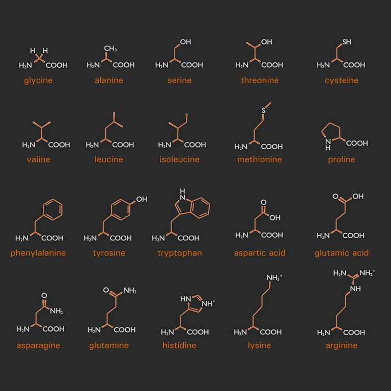 List of amino acids
