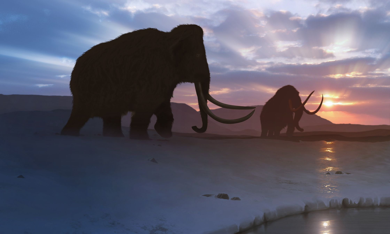 Artwork of the Tundra Mammoth