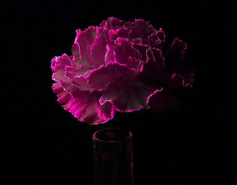 Glow In The Dark Black Light Projects