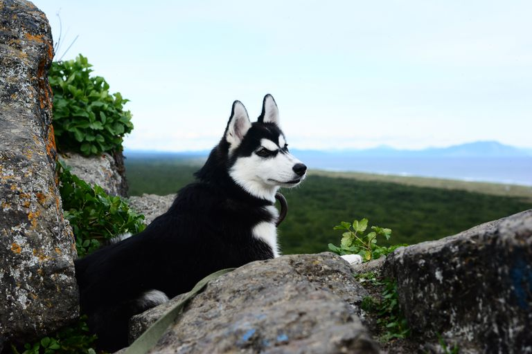 Dog On Rock Against Sky